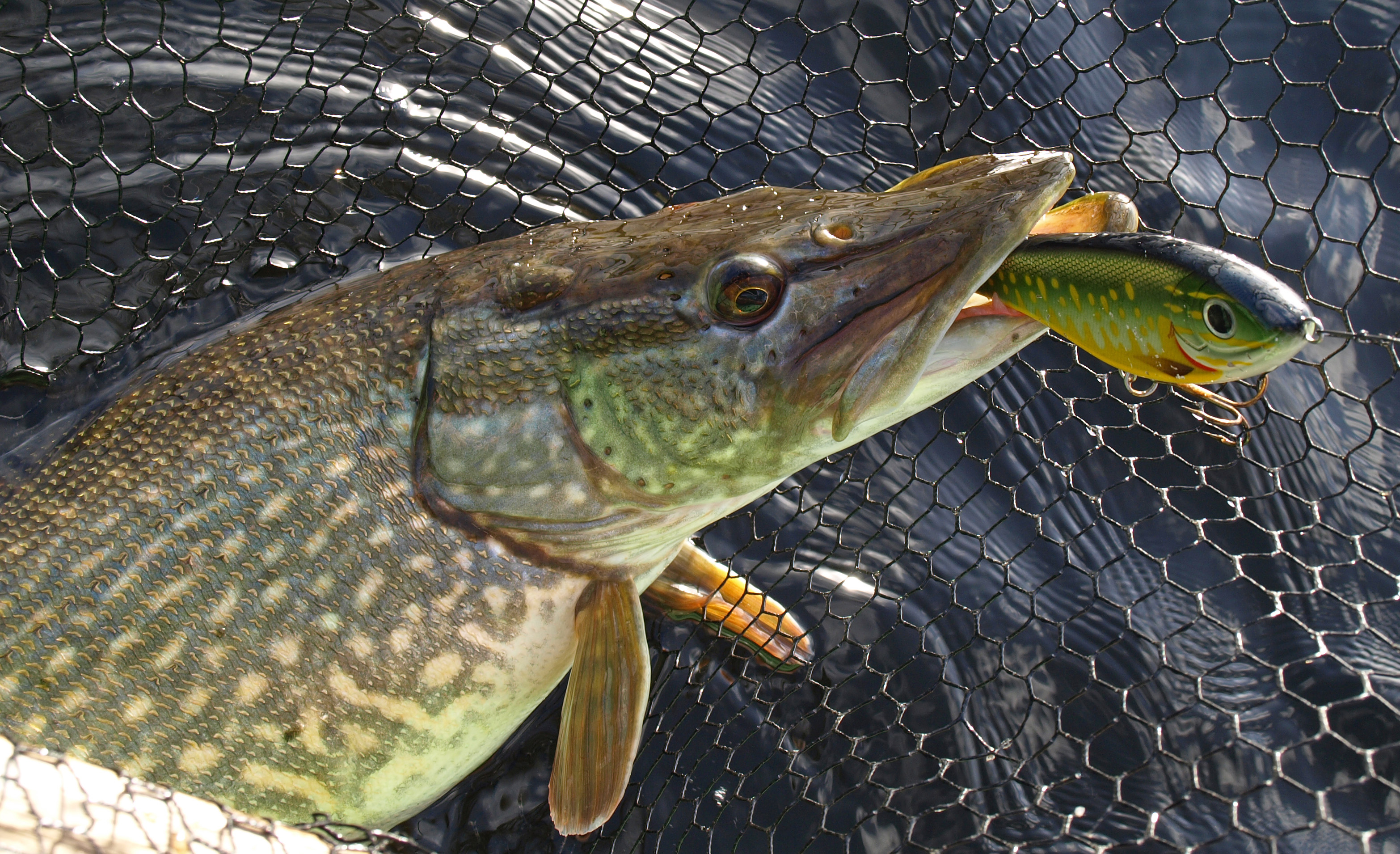 Angling Services Ireland | Pike Fishing Ireland